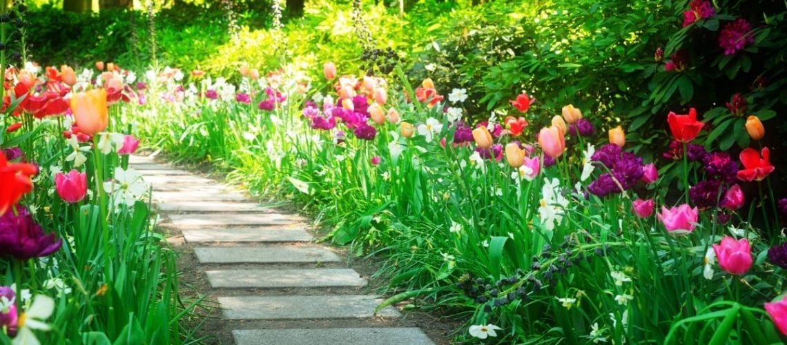 Path with grass and flowers on the side